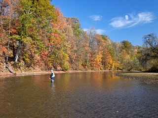 Fall Trout on the Fly