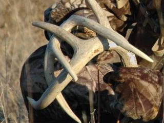 3 Essential Deer Calls Every Hunter Should Know