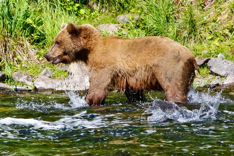 4 Places to Bag a Bear This Spring