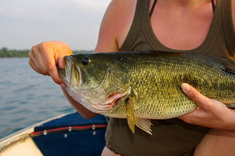 Fishing Quiz to Test Your Bass Knowledge