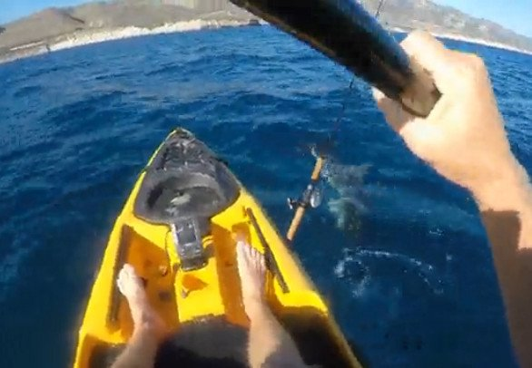 California Kayak Fisherman Fends Off Hammerhead Shark Attack