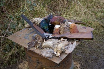 Tips for Hunting Pheasant on Public Land