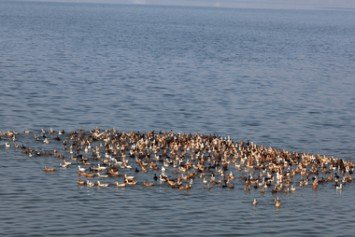 7 Boating Tips for Safe Waterfowl Hunting