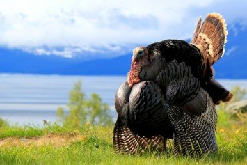 10 Turkey Hunting Tips You Can Use in the Field
