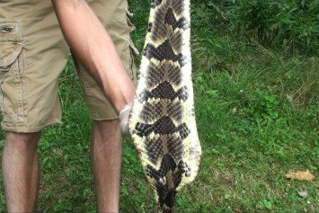How to Tan a Rattlesnake Hide