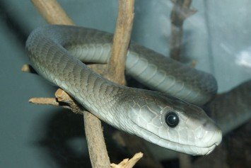 20 Most Venomous Snakes in the World