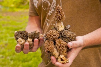 How to Avoid Crowds Morel Mushroom Hunting