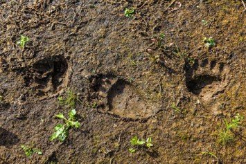 Simple Animal Tracking Tips Open Your Outdoor Experience