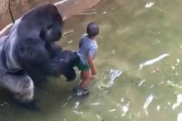 Zoo Director Says Barriers Safe After Killing Gorilla that Nabbed Boy