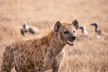 Teen Attacked by Hyena in South Africa Receives Emergency Surgery
