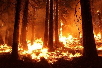 The Positive Effets of Wildfires