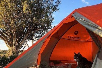 Best #CampingWithCats Photos on Instagram