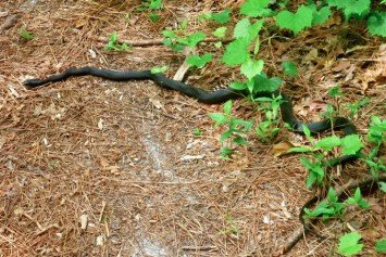 4 Tips for Dealing with Snakes on the Trail