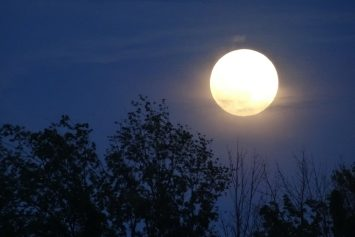 Does the Full Moon Really Affect Deer Hunting?