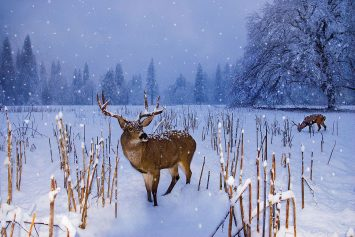 5 Tips for Hunting In the Snow