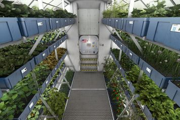 How to Grow Food on Mars