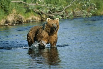 5 Best Bear Hunting Destinations in the World