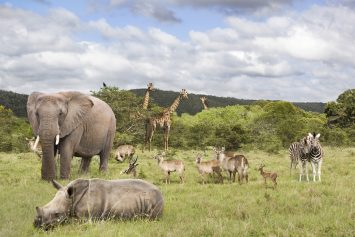 US Lifts Ban on Importing Big Game Trophies